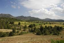 Sabinares de montaña en el Campo de San Juan. Moratalla